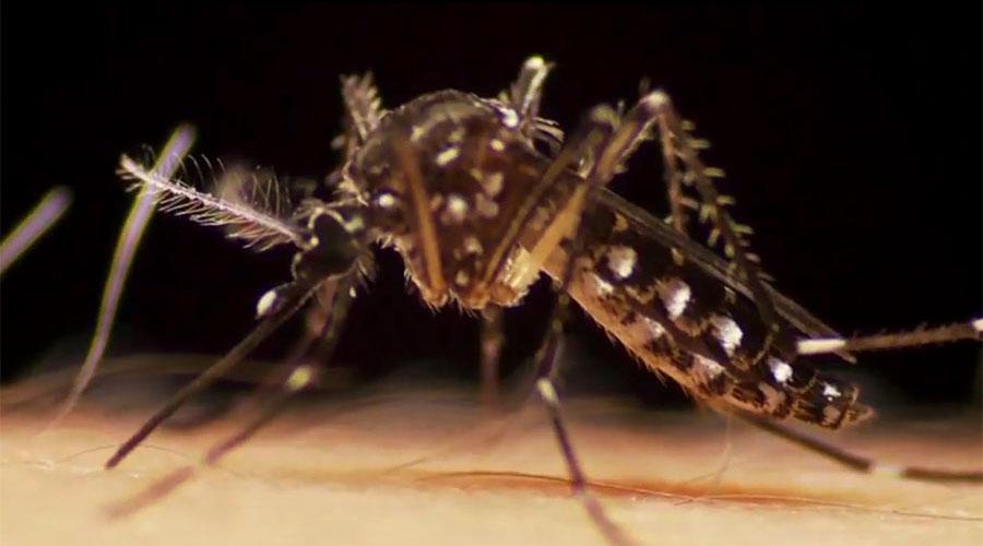 un-monde-sans-moustique